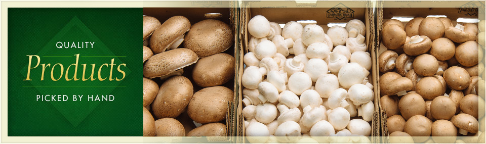variety of organic mushrooms in boxes